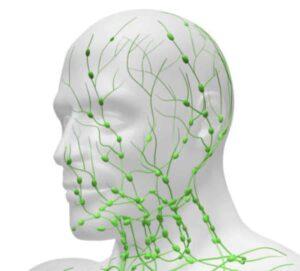 Système lymphatique visage
