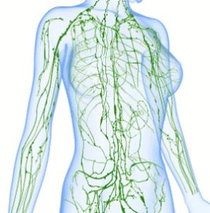système lymphatique minceur drainage Massage Drainant Amincissant